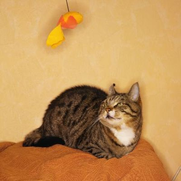 cat fur detangler spray