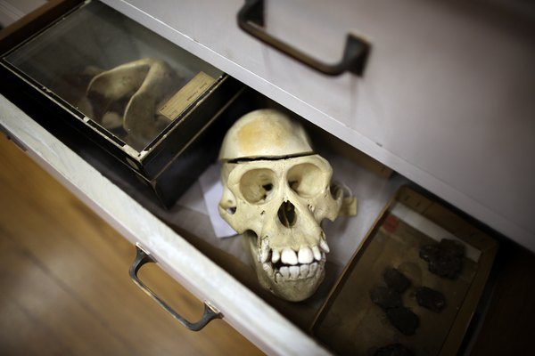 A desk drawer filled with animal remains for study.