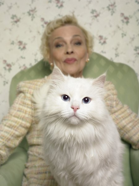 Blue Eyed Persian Cats Deaf