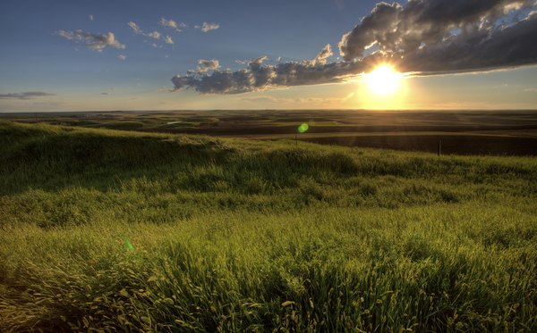 This prairie in Saskatchewan supports grasses and forbs but no trees.
