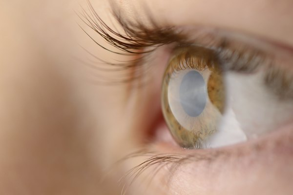 The lens of the human eye is adjustable.