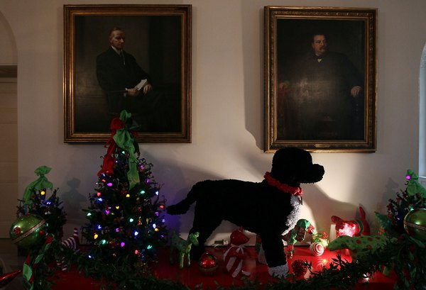 The Portuguese water dog, Bo, calls the White House home.