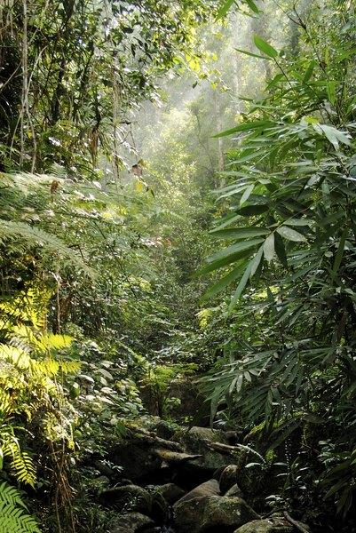 Rainforest in Sri Lanka