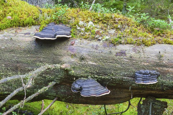 Moss and fungus growing on a fallen log in the forest.