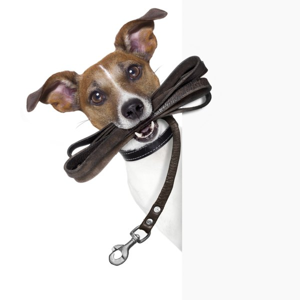 Instilling good leash manners in your dog can help protect against injuries.