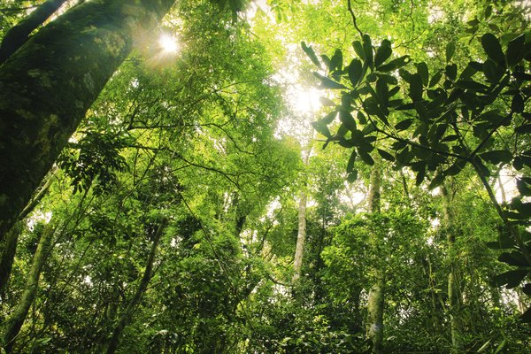 Many nonprofit groups are working to reduce customer demand for items from the rainforest.