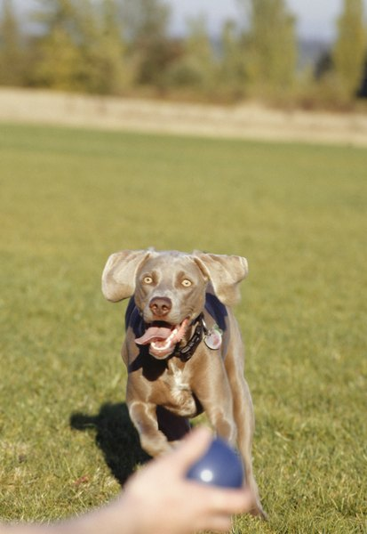 Play fetch with your puppy for exercise and bonding.
