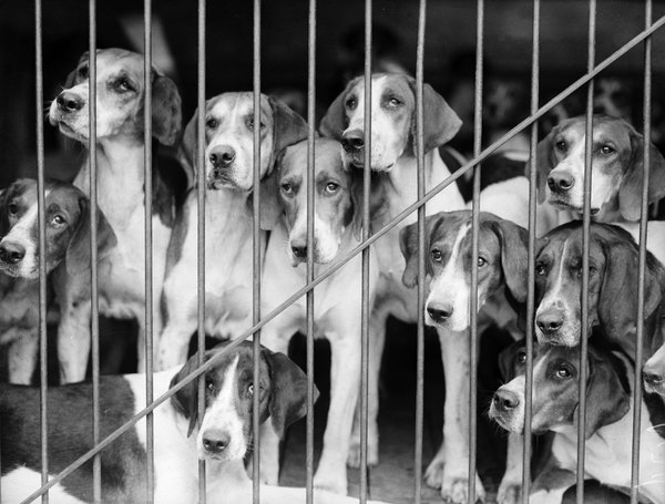 Puppy mills are among the top contributors to animal neglect and abuse.