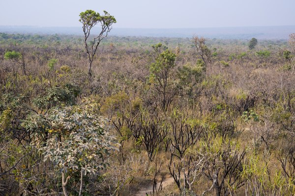 Old, heavily weathered soils often support tropical savannas in Brazil.
