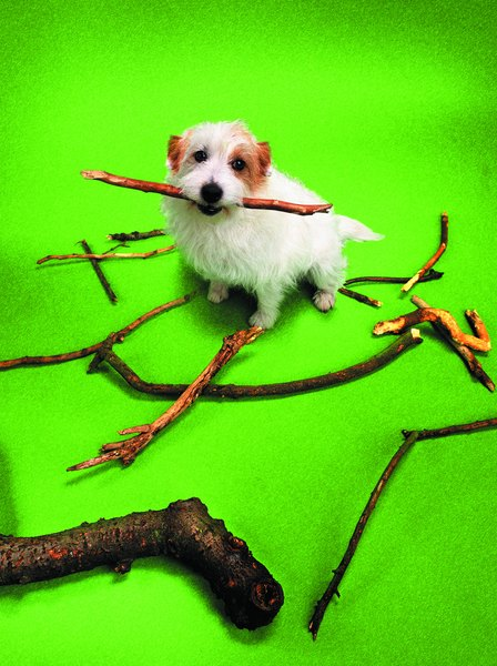 How to Keep Dogs From Destroying Trees & Bushes - Pets
