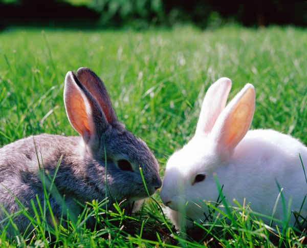 Rabbit pinworms are species specific and unable to transfer to dogs.