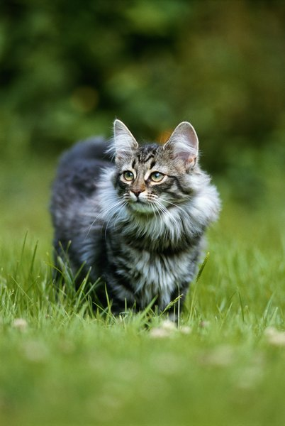 How to stop cats from spraying in your yard