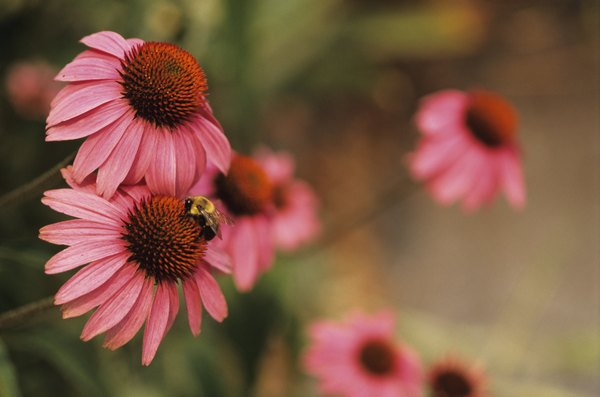 Bees pollinate flowers.