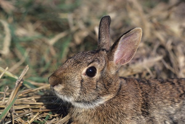 Rabbits are just one source of tularemia infection.