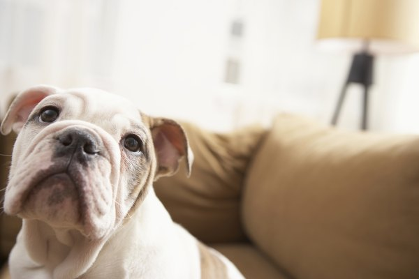 Your dog's couch-rubbing may have a simple explanation.