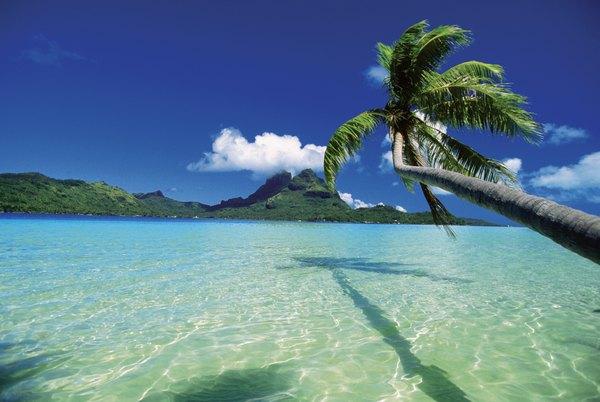 Las palmeras parecen asomarse a las cristalinas aguas tropicales.