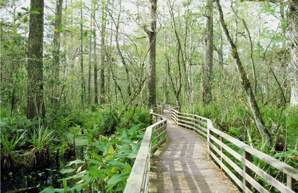 A bridge runs through a wetland sanctuary in FLA.
