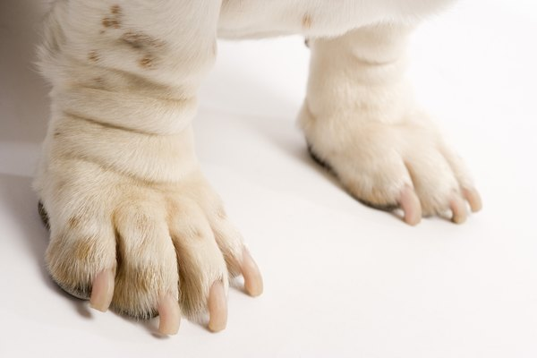 Make it a part of your daily routine to check your dog's feet for broken toenails and injury.