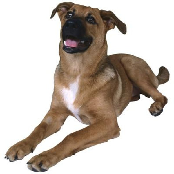 Is Corn Oil Good For A Dog S Coat Pets