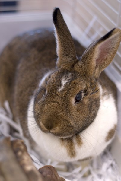 Can Cat Litter Be Used In The Bottom Of A Rabbit Cage Pets