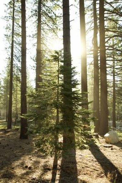 The Best Grass for Shade Around Pine Trees | Home Guides