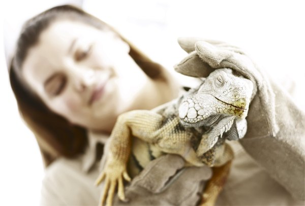Zoologists work for zoos, animal sanctuaries, research laboratories and government agencies.