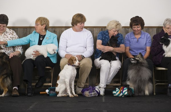Anxious dog moms wait for an announcement of show results.