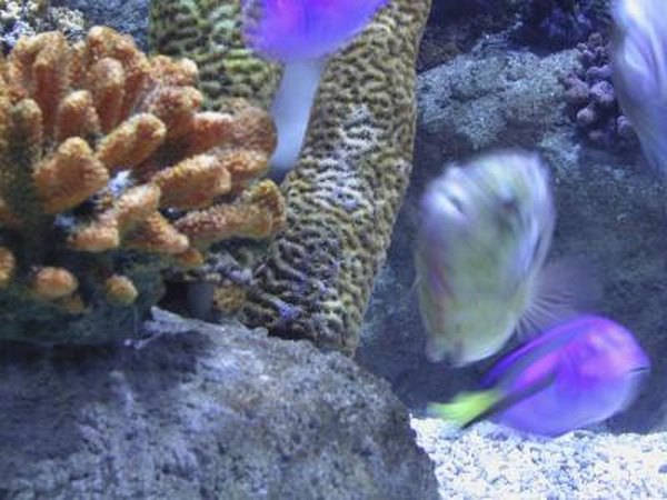 White Slime in a Saltwater Aquarium | Animals - mom me
