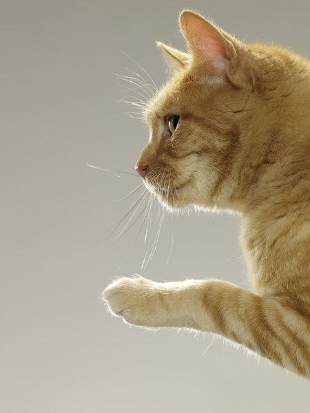 will a boy cat spray to mark his territory around a new male kitten