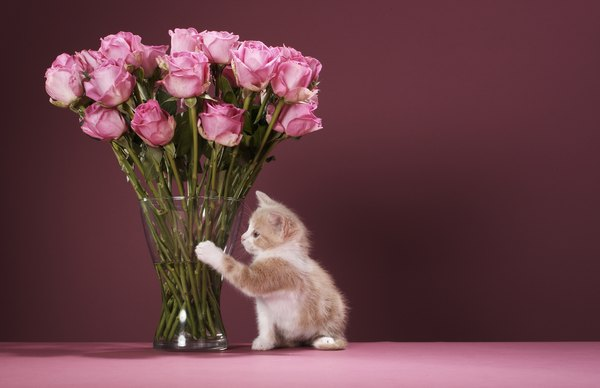 Are roses harmful to cats pets call a poison hotline if you suspect your cat ate something toxic mightylinksfo