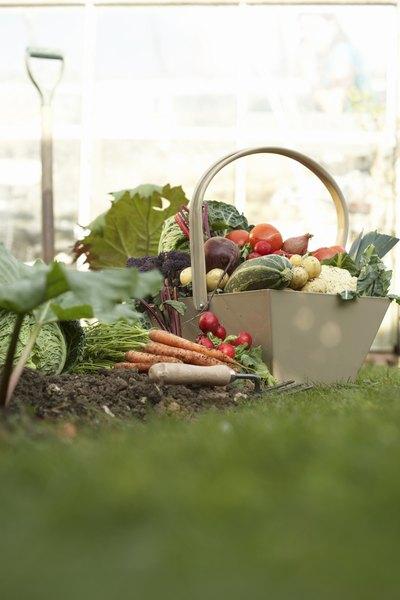 Compre alimentos orgânicos