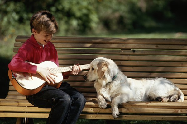Some music can really be sweet to your dog's ears.