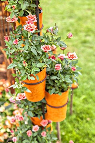 Um jardim perfumado acalma a alma