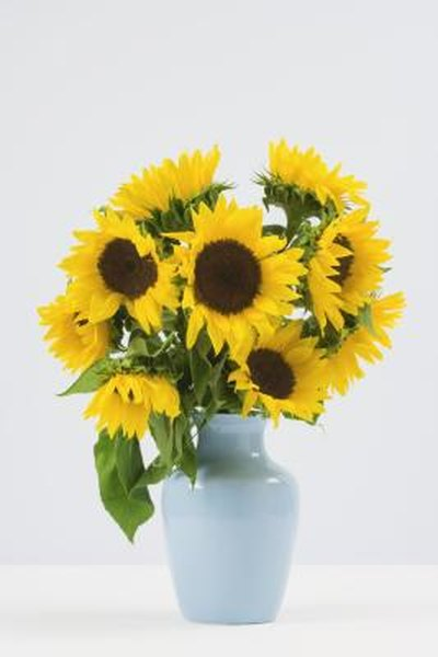How To Cut Sunflowers To Put In A Vase Home Guides Sf Gate