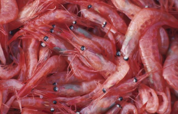 If shellfish causes allergic reactions, avoid krill.