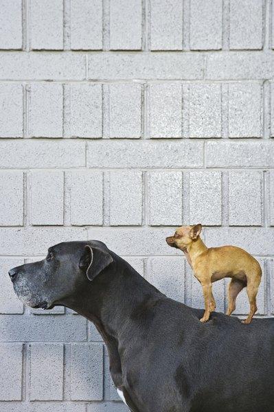 Escolher um cachorro não é um processo assim tão simples