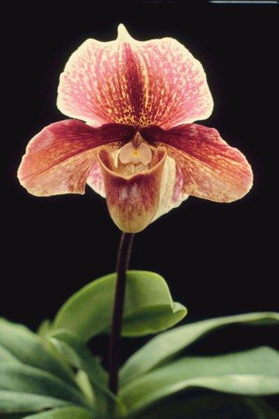 De las plantas más hermosas
