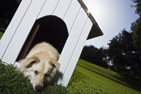 Doghouses should allow your pup to feel safe and comfortable.