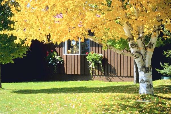 Vigila que las hojas del árbol no obstruyan los desagües.
