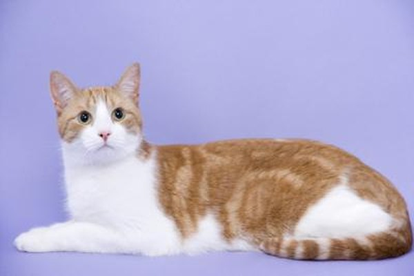 Buprenorphine For Cats In Food
