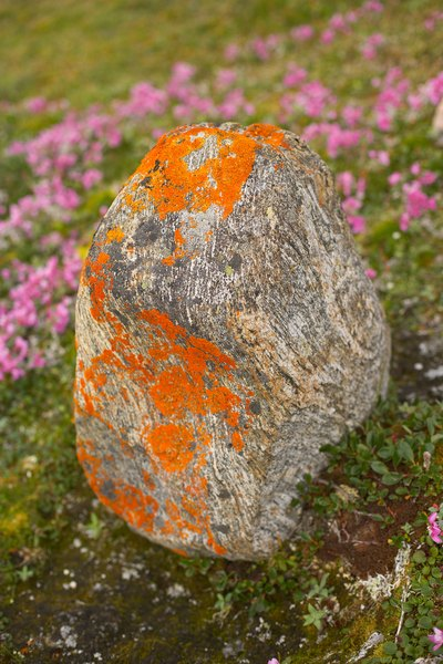 Rock with lichen