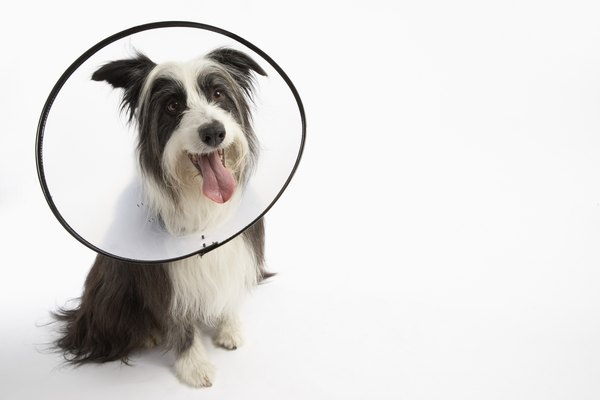 Your dog will need your help to heal and recover quietly.