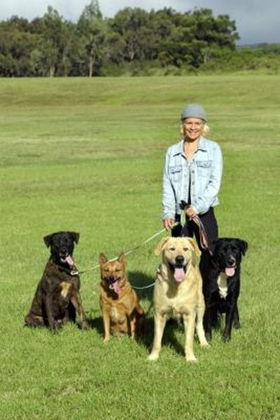 How Much Do Dog Walkers Get Paid Pets
