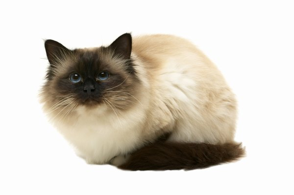 Iv Fluid Therapy For Cats Pets