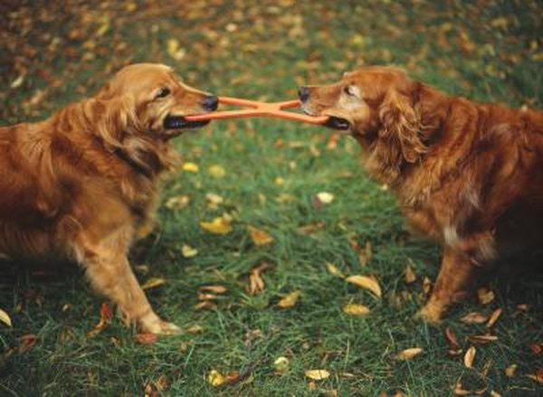 10 Dog-Themed Party Games for Kids - The Spruce