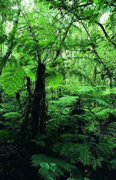 African forest habitat