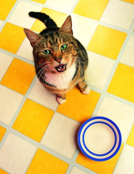 Homemade food can help your sensitive kitty feel better.