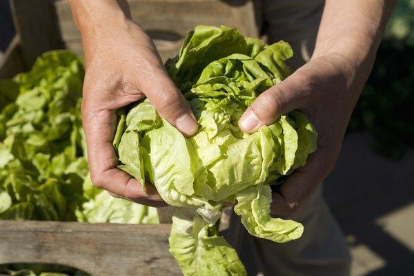 Folhas verdes escuras são ricas em nutrientes e baratas.