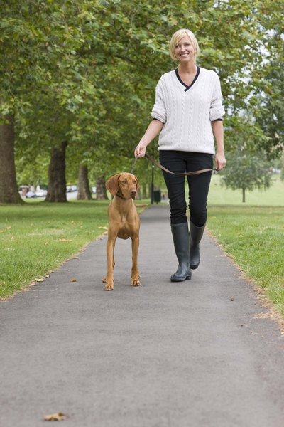 Dogs like this pointer, a vizsla, enjoy the company of humans, and love to run and walk regularly.