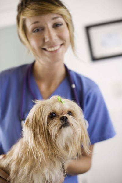 Dogs scheduled for surgery shouldn't have food at least 8 to 10 hours prior to the operation.